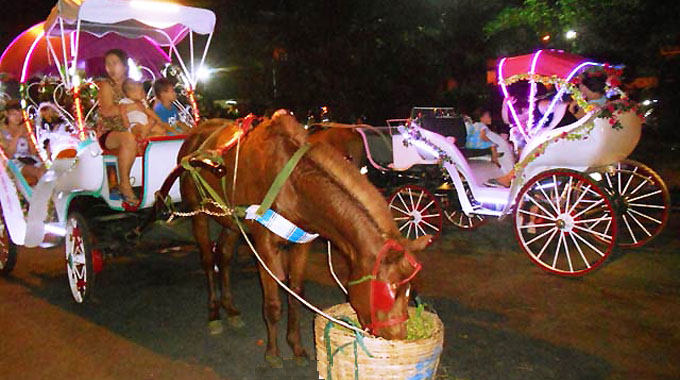 Quy Nhon starts horse-drawn carriage tours