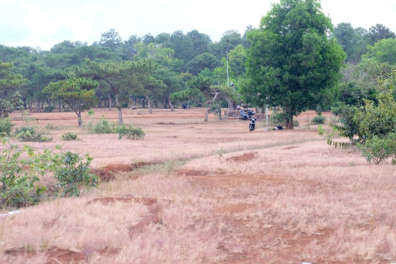 Walking on the pink grassy hills in Gia Lai