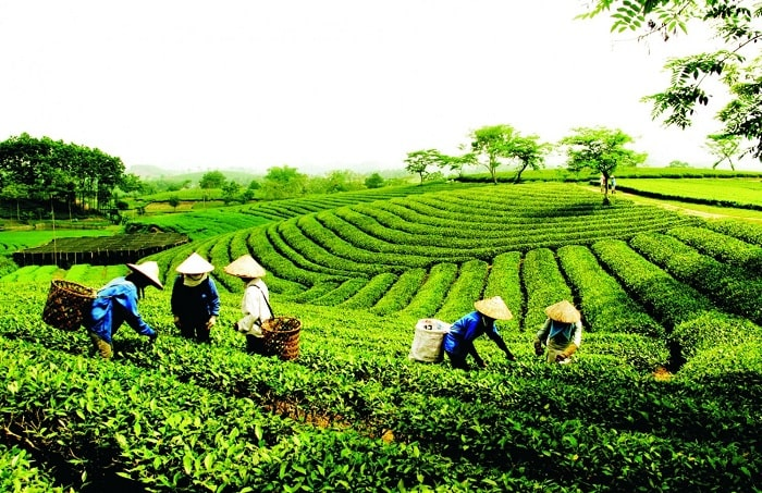 Attracting community-based tourism in Tea Land of Thai Nguyen
